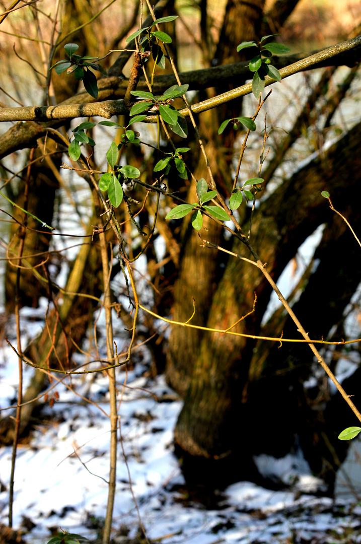 An einem winterlichen Frühlingstag