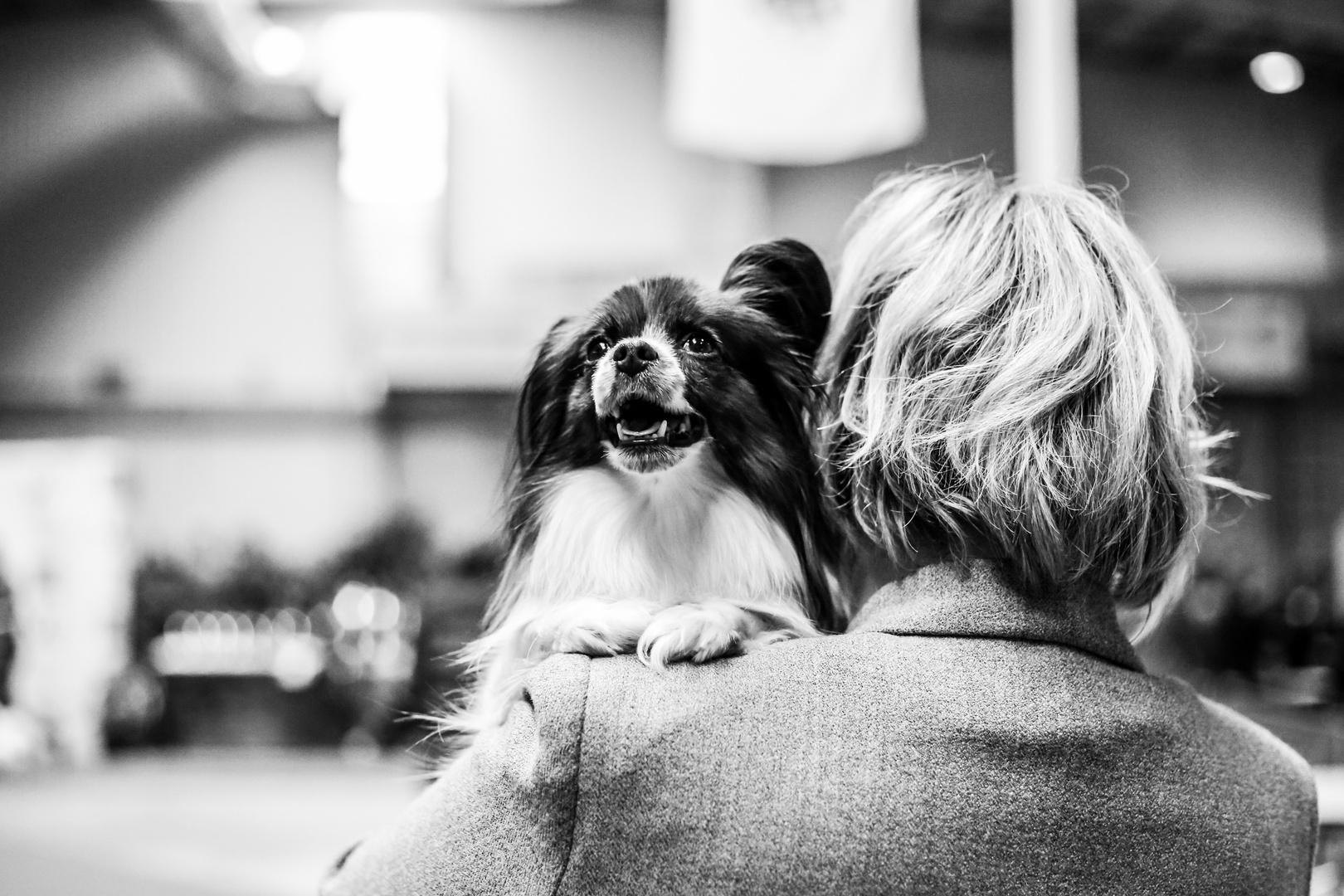 An einer Hundeschau in Reykjavík 2