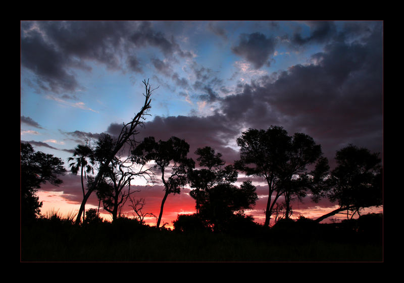 An Evening in Okavangodelta