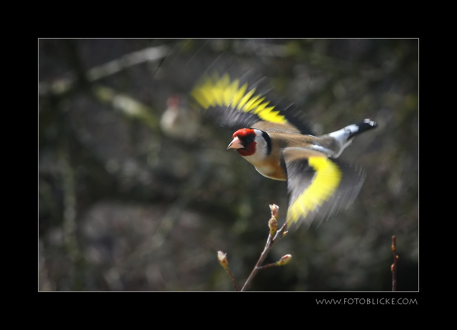 An Flug