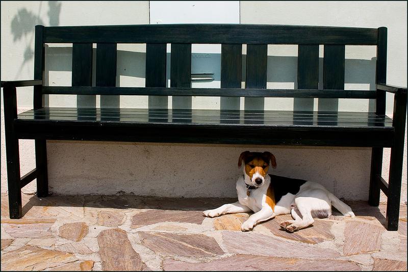 """...an """"Hundstagen"""" hilft nur Schatten..."""