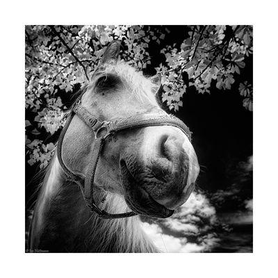 an IR-horse