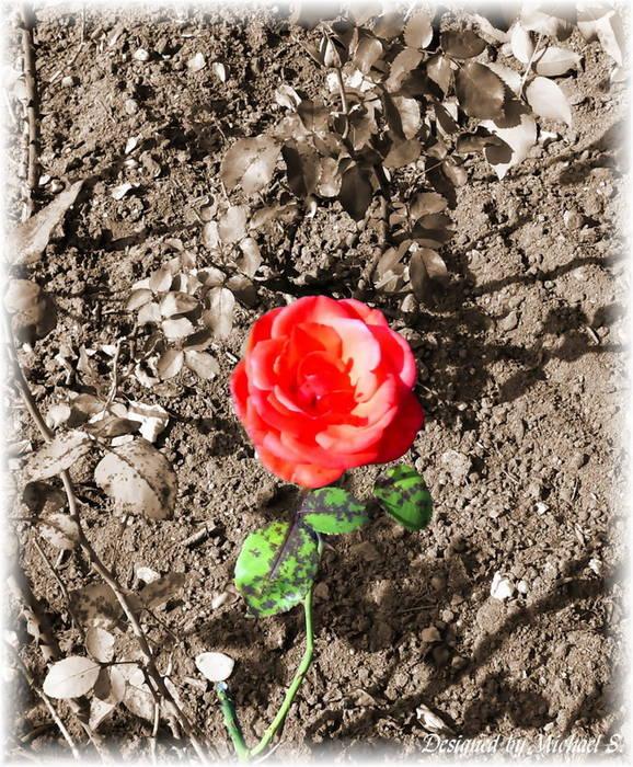 """""""An meine Rose"""""""