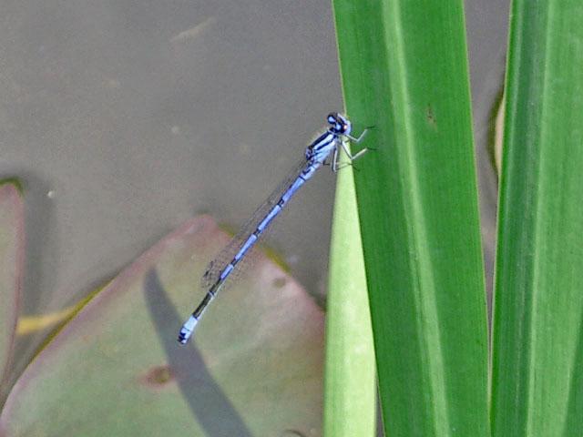An meinem Teich