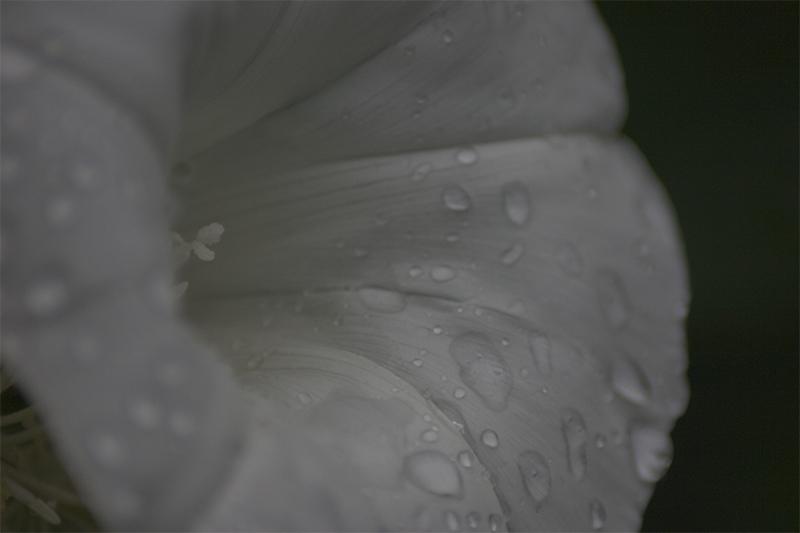An so einem Sommer Sonntag weinen sogar die Blumen.