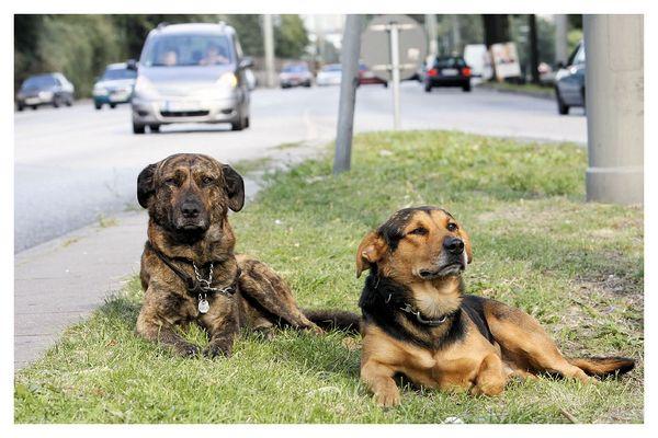 an Straßenrand saßen diese Beiden