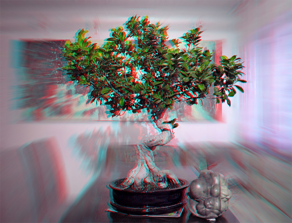 anaglyphe ficus benjamini als bonsai gestaltet foto bild stereoskopische raumbilder. Black Bedroom Furniture Sets. Home Design Ideas