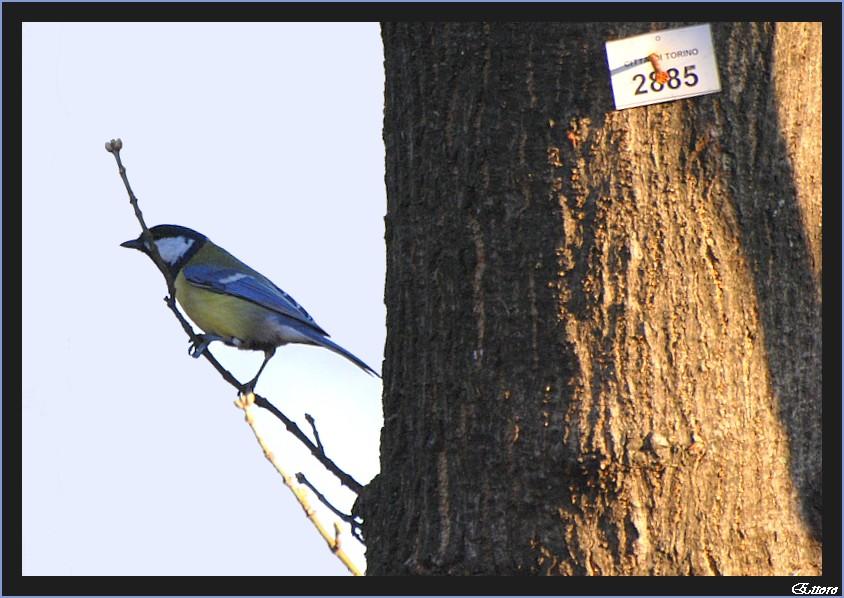 Anagrafe ornitologica