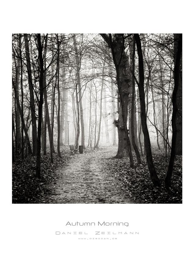 analog: Autumn Morning
