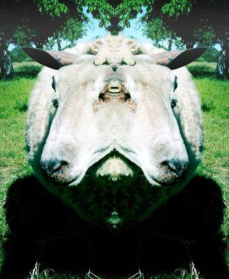 Analogie symétrique de la nature