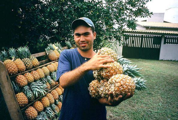 Ananasverkäufer