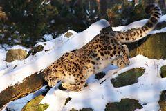 Anan...der Schnee Schleicher...