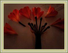 anatomia di un fiore20160425_090222