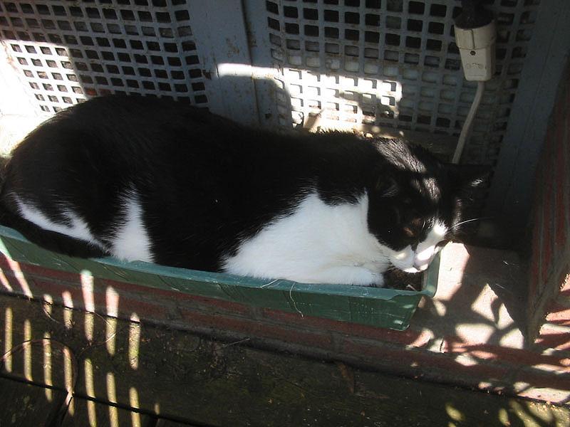 Anbau von Katzen im eigenen Garten