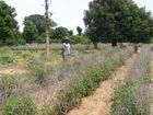 Anbaugebiet