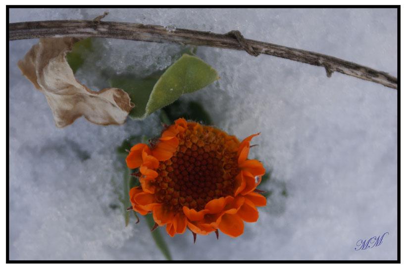 Anche con la neve che mi copre faccio capolino e cerco il sereno!!!