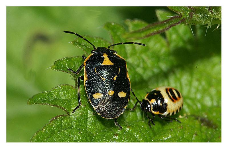 Anche gli insetti tengono famiglia