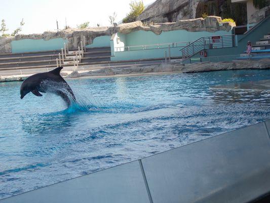 Anche i delfini sanno volare