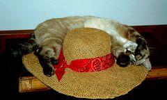...Anche il mio Gigi ama i cappelli....
