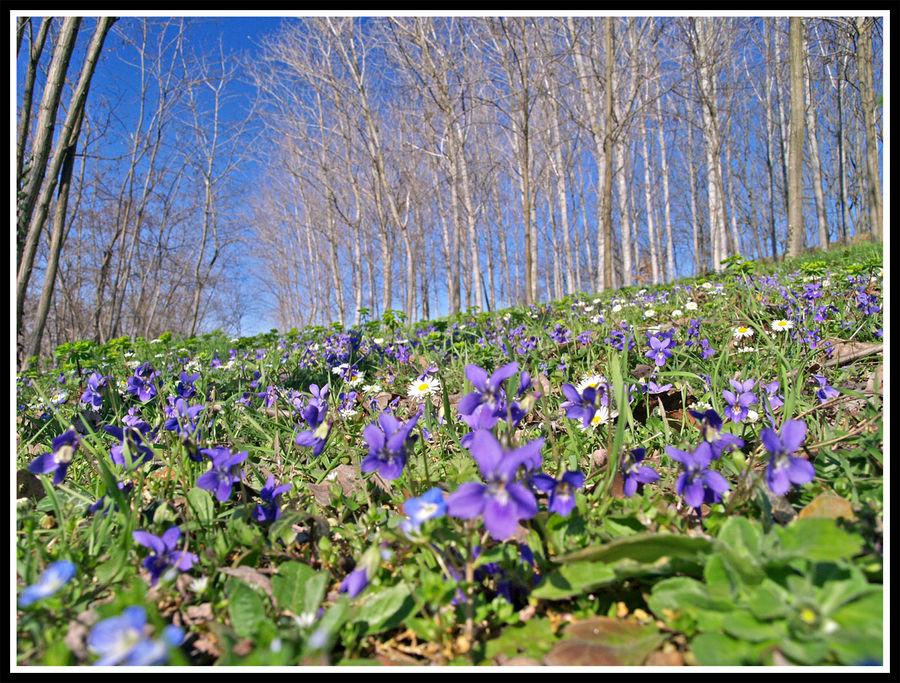 anche quest'anno primavera è arrivata.....