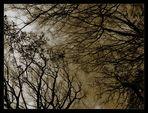 Ancient Woods II