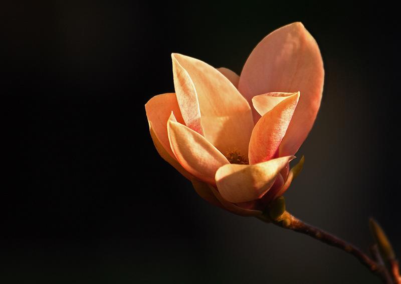 ancora . . . fiori . . .