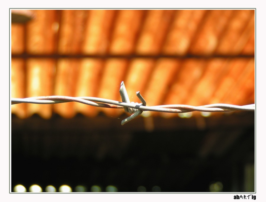 And I wrap my Heart in Barbed Wire (colour)