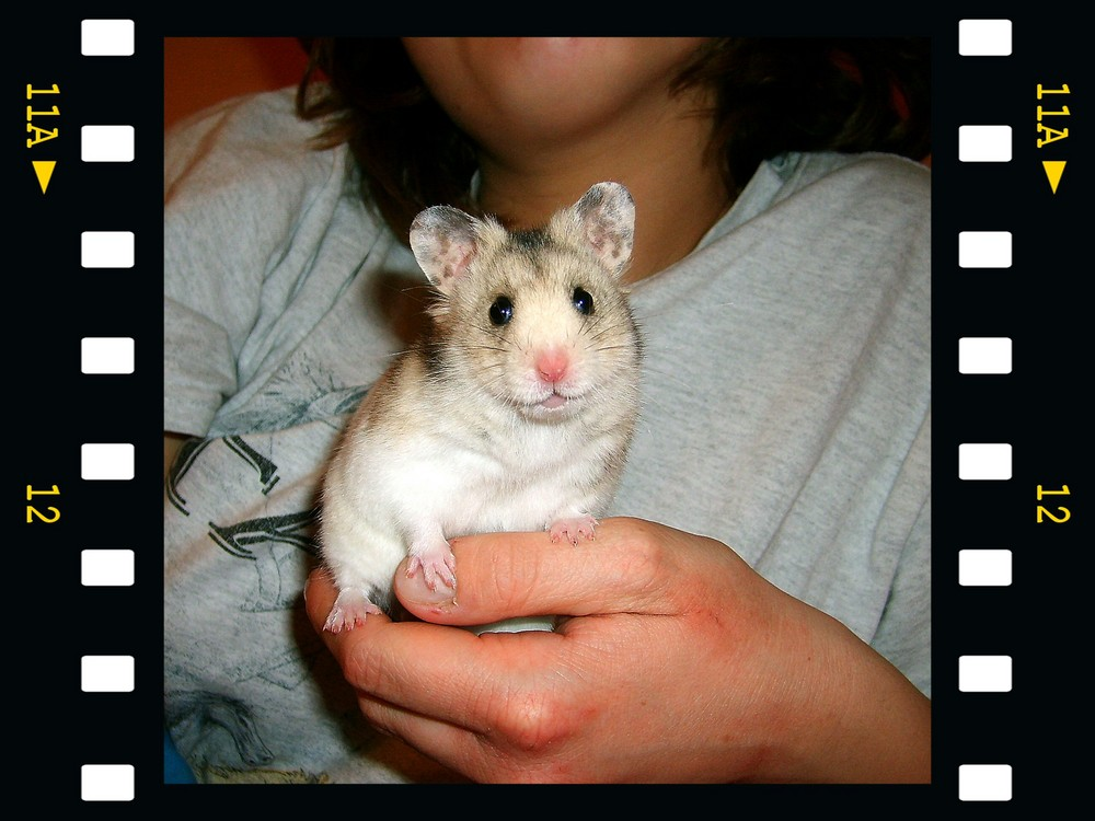 And the Oscar goes to: Acapulco - the most friendly hamster in town