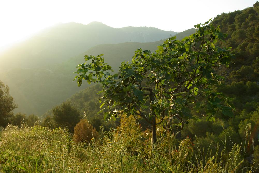 Andalusien, Abendstimmung