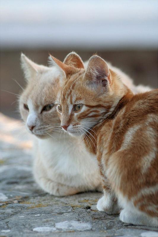 """Andalusische """"Mauerkatzen""""genießen die Abendsonne"""