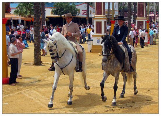 Andalusische Traumpferde