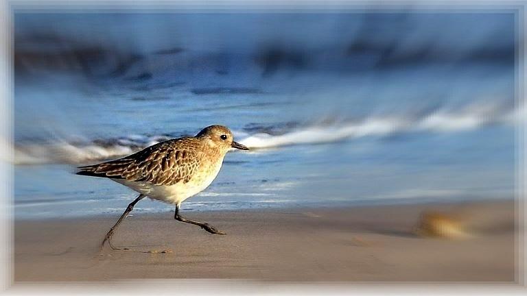 Andando sobre la arena