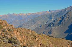 Andenkondore über dem Colca-Canyon