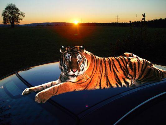 .... andere haben den Tiger im Tank