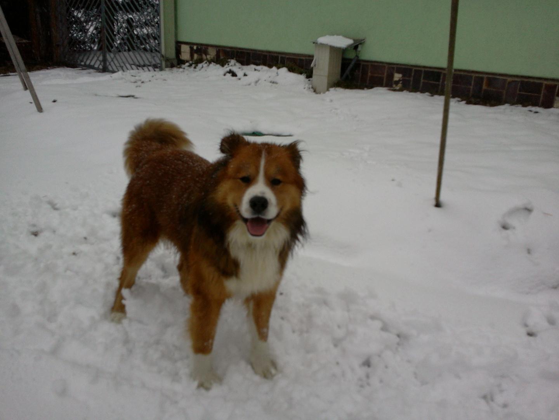 Andor im Schnee