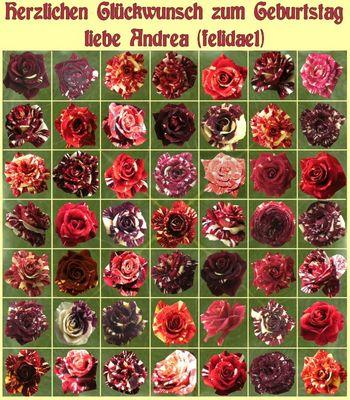 Andrea hat Geburtstag