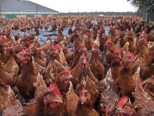 Andy Warhol was a chicken !