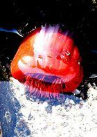 Anemonatomate marina