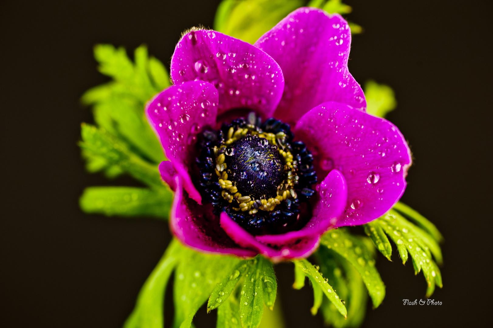 """anemone"""