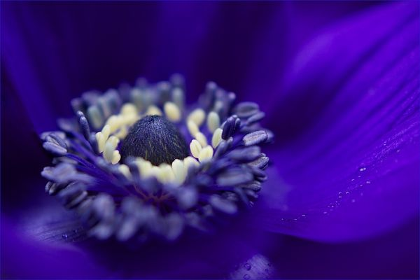 ... anemone ...