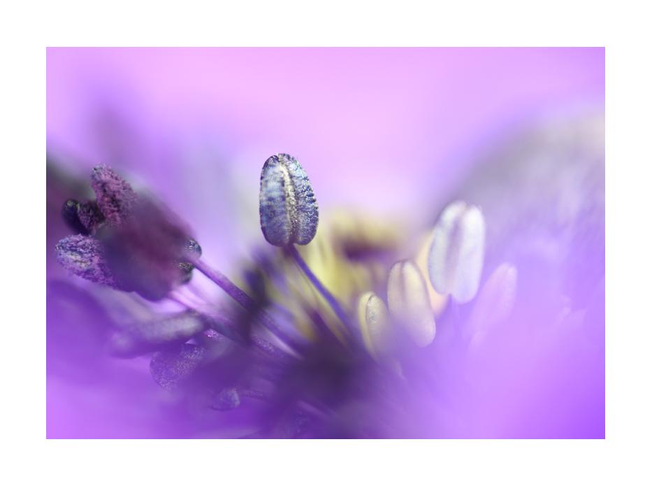 Anemone en détail