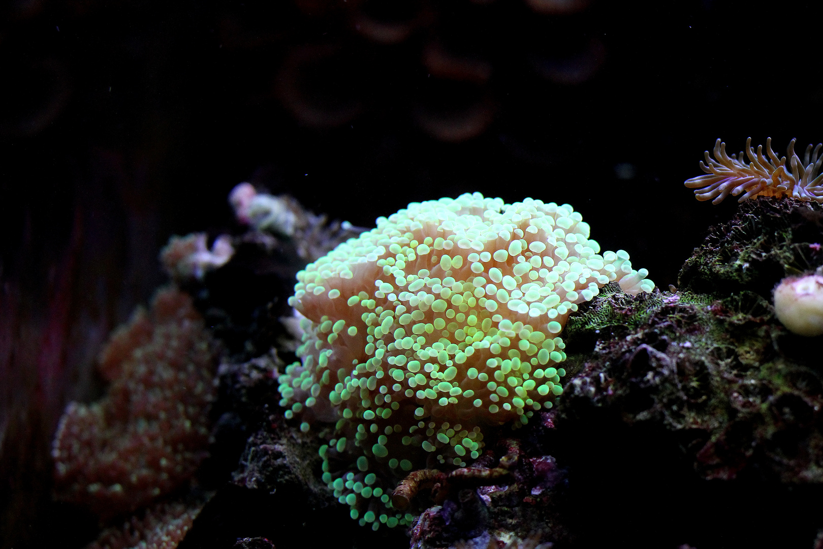 Anemone im Sea Life Oberhausen