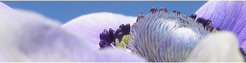 . anemonen lesezeichen .