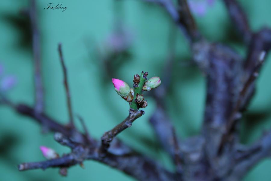 Anfang der Frühling