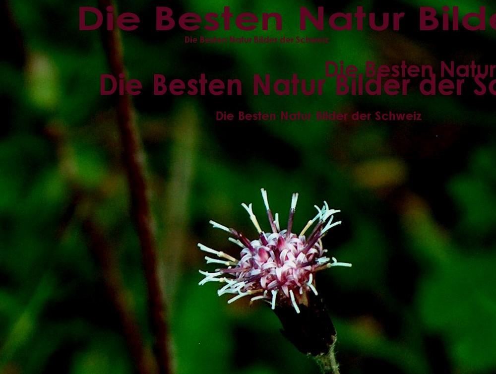 Anfang der Serie Naturbilder der Schweiz...
