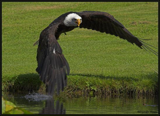 - Anflug auf den Teich -