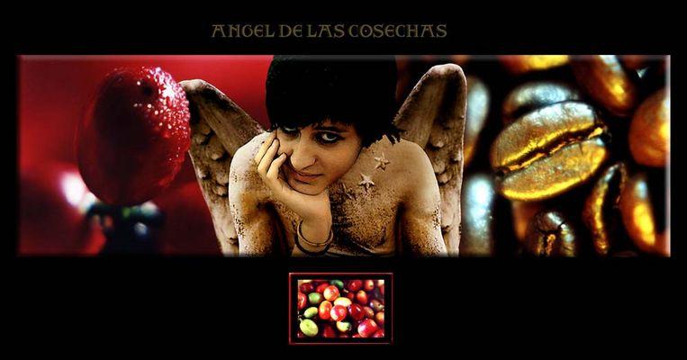 ANGEL DE LAS COSECHAS