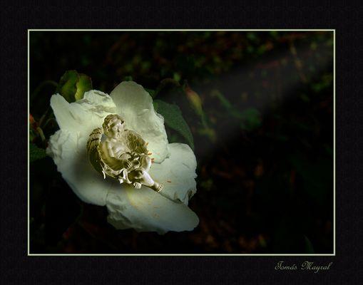 Angel Floral