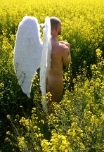 Angel wings 2