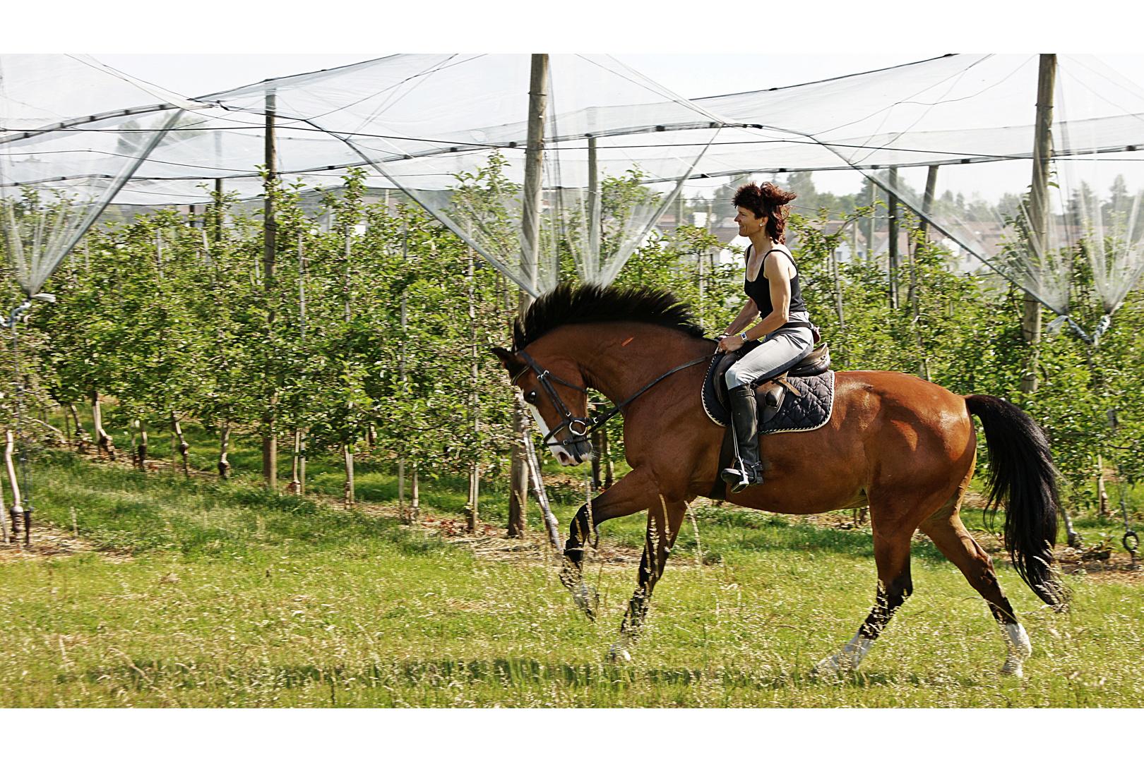 Angela, Moritz und Apfelbäume